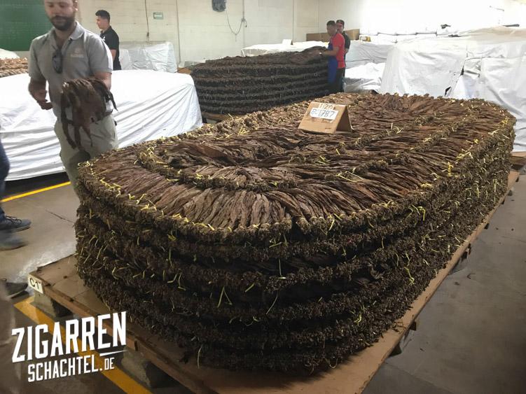 fermentation-von-tabak