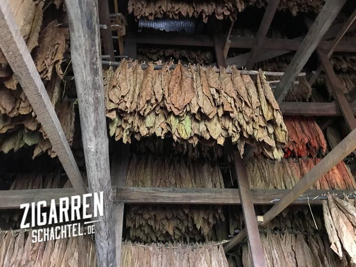 tabak-im-trockenschuppen